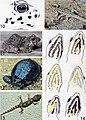 Bonn zoological bulletin (2012) (19771709524).jpg