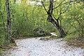 Bosco e sentiero naturale -Senerchia - Oasi naturale Valle della Caccia -Avellino 10.jpg