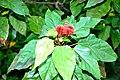 Botanic garden limbe44.jpg
