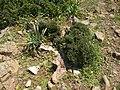 Bouachouch forest. Ait mimoun. Khemisset 9.jpg