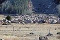 Boulder field from 1965 failed reservoir flood (Gillette Flats, Colorado, USA) 1.jpg