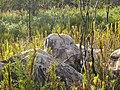 Boulders with Beautiful Rock Patterns.jpg