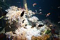 Boulogne sur mer.- Nausicaà (aquariums) (1).jpg