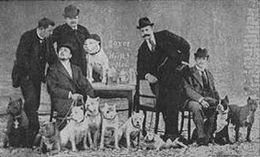 Image Result For Trained Hunting Dogs