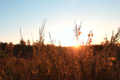 BrachterWald bei Sonnenaufgang12.png