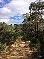 Braeside Trail - panoramio (13).jpg
