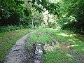 Bridleway through Oldhouse Warren, Near Crawley, West Sussex. - geograph.org.uk - 31430.jpg