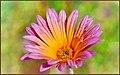 Bright and Happy - Flickr - tdlucas5000.jpg