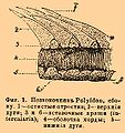 Brockhaus and Efron Encyclopedic Dictionary b15 091-0.jpg