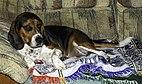 Bronco on a blanket 1.jpg