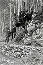 Bukev, sestavljena iz 13 debel ob poti k izviru Bistrice leta 1912. Poleg stojita Anton Peterlin in Anton Šuštar.jpg