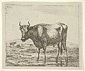 Bull Standing in Water, from Different Animals MET DP828086.jpg
