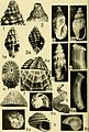 Bulletins of American paleontology (1958-1959) (19880283094).jpg