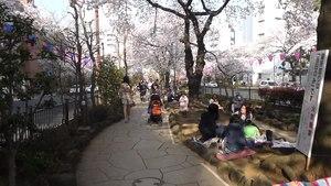 File:Bunkyo-tokyo-japan-hanami-april2015.ogv
