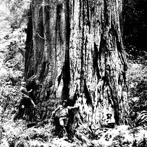 Save-the-Redwoods League - Frederick Russell Burnham, a League founder, at his 5,000-acre (20 km²) La Cuesta cattle ranch, Three Rivers, California, near the entrance to Sequoia Park. 1908.