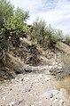 Butcher Jones Trail to Pinter's Point Loop, Tonto National Park, Saguaro Lake, Ft. McDowell, AZ - panoramio (154).jpg