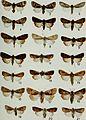 Butterflies and moths of Newfoundland and Labrador - the macrolepidoptera (1980) (20322975230).jpg
