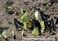 Buxa jayanthi 2010 04 30 IMG 9999 299 1 Balakrishnan valappil (5735584440).jpg