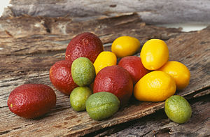 Australian lime - Blood Lime (biggest, red), Sunrise Lime (orange, pear-shaped) and the Outback Lime, a small, green cultivar of the Desert Lime