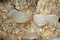 Calcite, quartz 300-4-1339.JPG