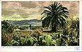 California - A California Winter Landscape (NBY 432059).jpg