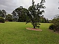 Cambewarra, New South Wales 1.jpg
