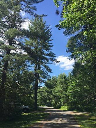 Hartwick Pines State Park - Campground in the park.