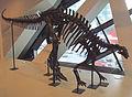 Camptosaurus, ROM.jpg