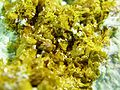 Carnotite-Chrysocolla-214962.jpg