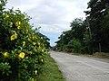 Carranglan, Nueva Ecija4022 05.JPG