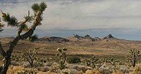 Castle Mountains and Joshua Trees.jpg