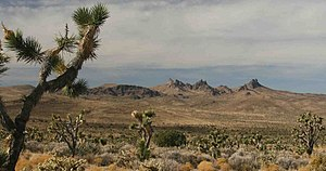 Castle Mountains National Monument - Image: Castle Mountains and Joshua Trees