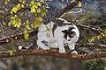 Cat in tree03.jpg