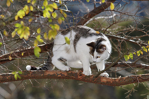 Cat in tree03.jpg