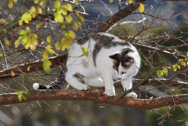 File:Cat in tree03.jpg