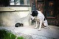 Catdog (3338584692).jpg