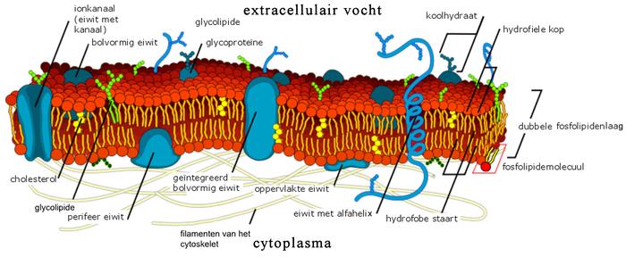 Plantenfysiologie - Wikipedia