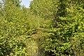 Cena, Olaines pagasts, Olaines novads, Latvia - panoramio (2).jpg