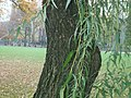 Central Park in the Fall..jpg