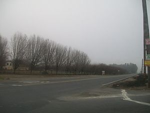 Tule fog - Tule fog settled on an orchard in Stanislaus County in late December.