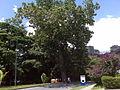 Centro Medico Docente La Trinidad (CMDLT) 2012 044.jpg