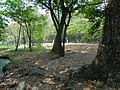 Chacamax, Chis., Mexico - panoramio (1).jpg