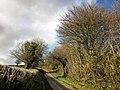 Chard Lane (geograph 4363920).jpg