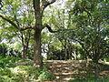 Chausuyama battlefield, May 1615, Osaka - DSC05811.JPG