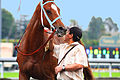 Chestnut Thoroughbred Horse (3433223374).jpg