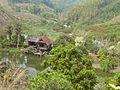 Chiang Rai Province P1110719.JPG