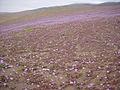 Chile - Atacama rosado por PUC.jpg