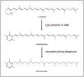 Chlorobactene Biosynthesis.png