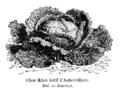 Chou Milan hâtif d'Aubervilliers Vilmorin-Andrieux 1904.png