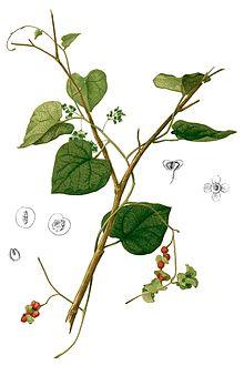 AnexoPlantas medicinales AB  Wikipedia la enciclopedia libre